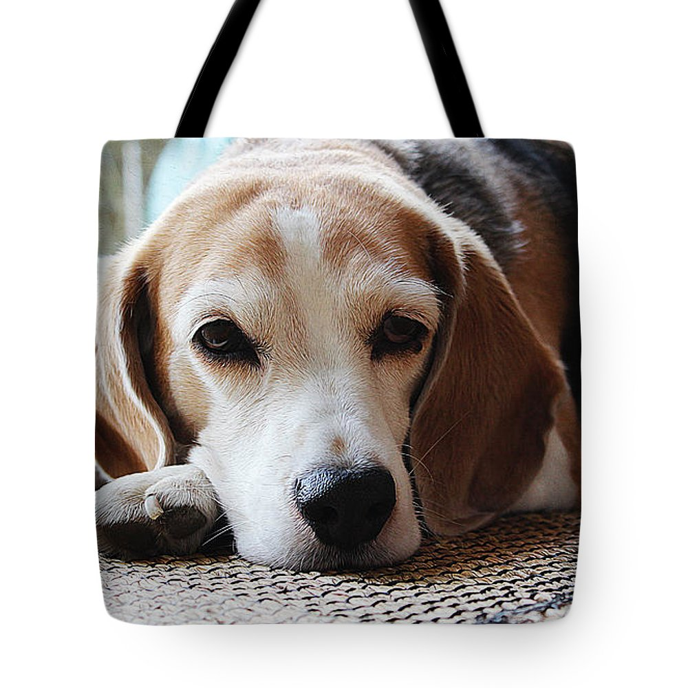 Dog Art Tote Bag featuring the painting A Dog Thinking by Queso Espinosa