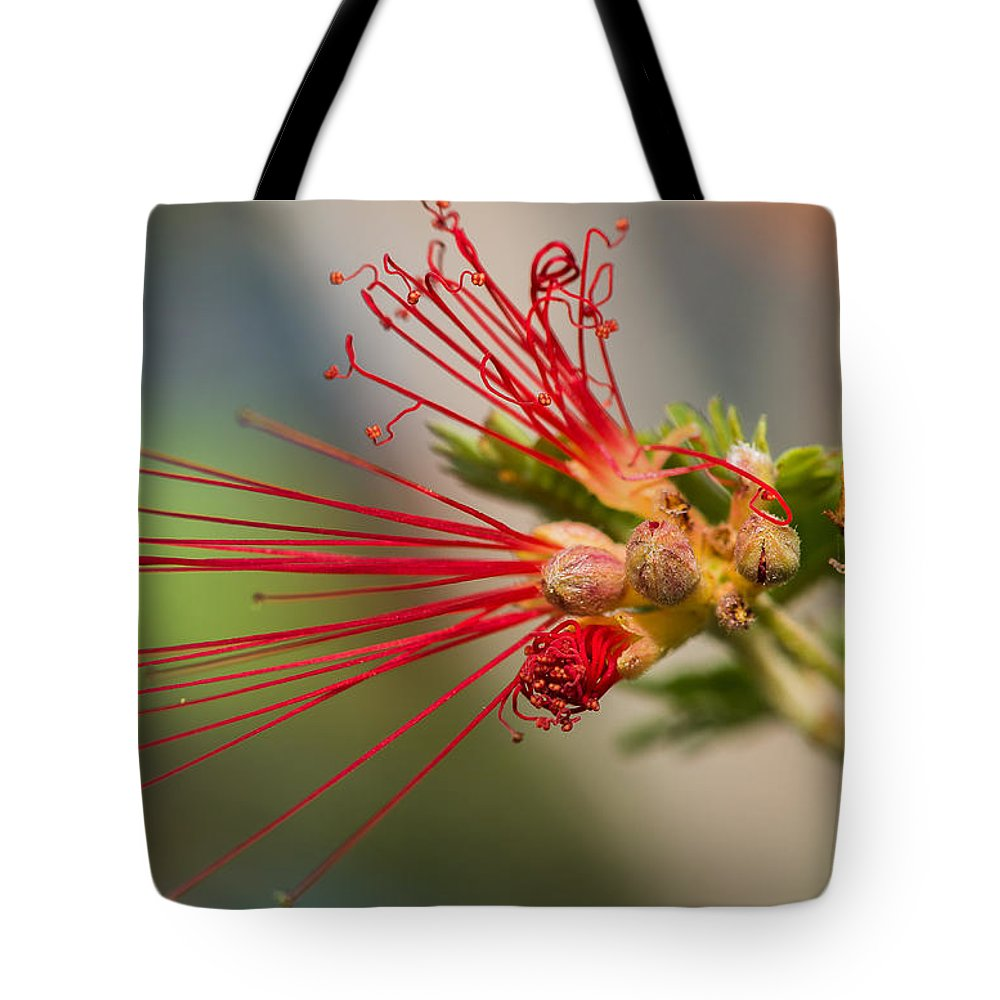 Black Tote Bag featuring the photograph A Fairy Duster Is Born by Barbara Fagan Sullivan