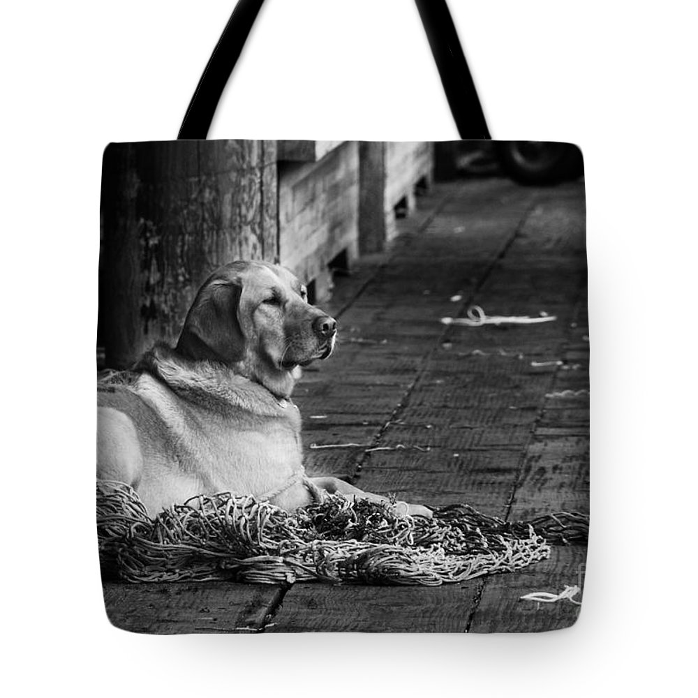 Dog Tote Bag featuring the photograph A Fisherman's Best Friend by Camilla Brattemark