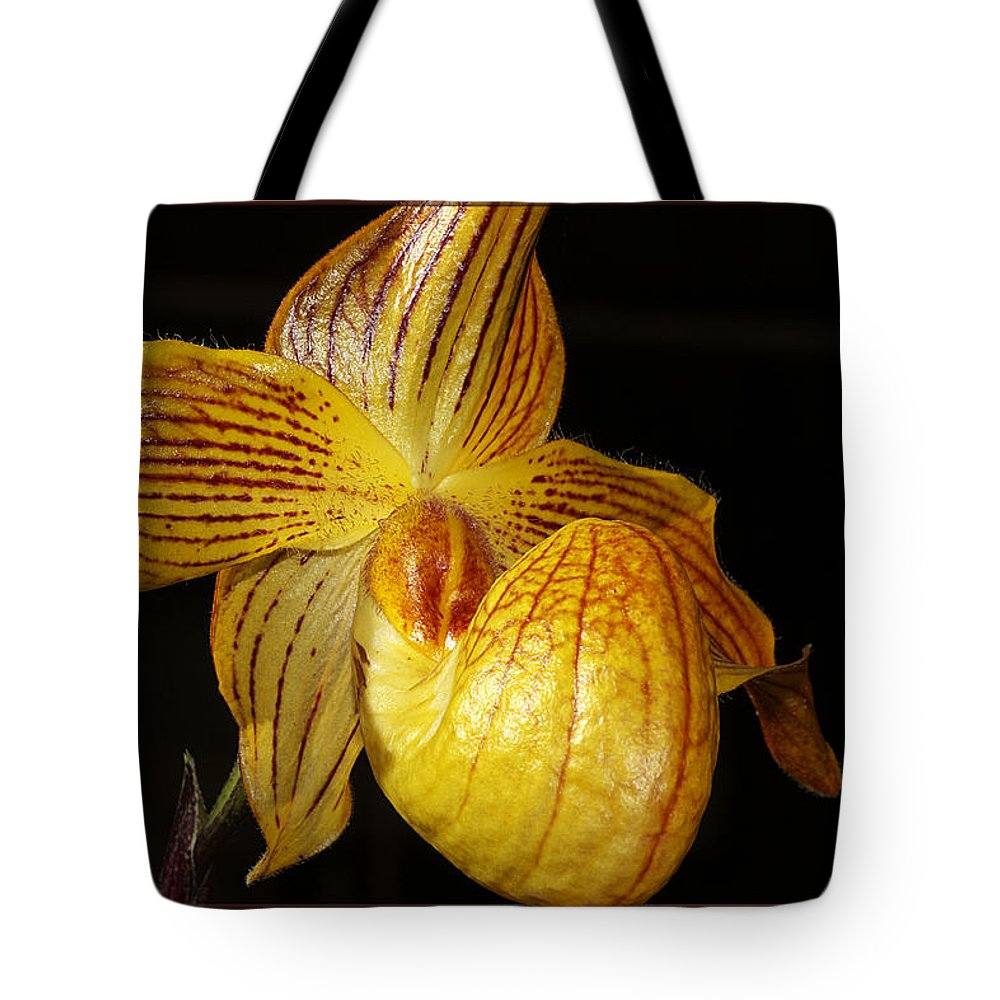 Orchid Tote Bag featuring the photograph A Golden Slipper by Phyllis Denton