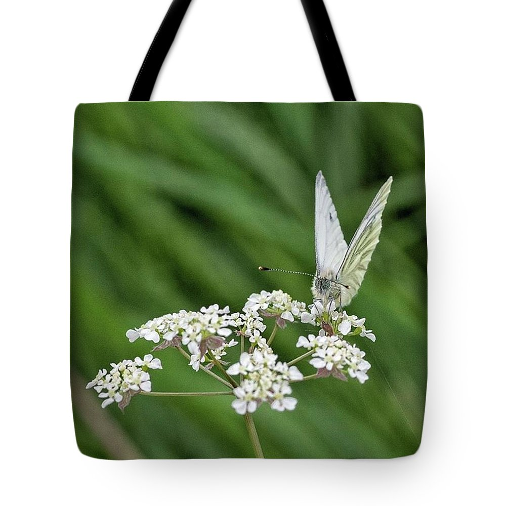 Insectsofinstagram Tote Bag featuring the photograph A Green-veined White (pieris Napi) by John Edwards