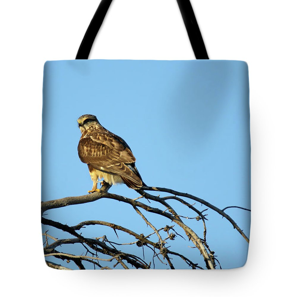 Tote Bag featuring the photograph A Hawks Eye View by Brook Burling