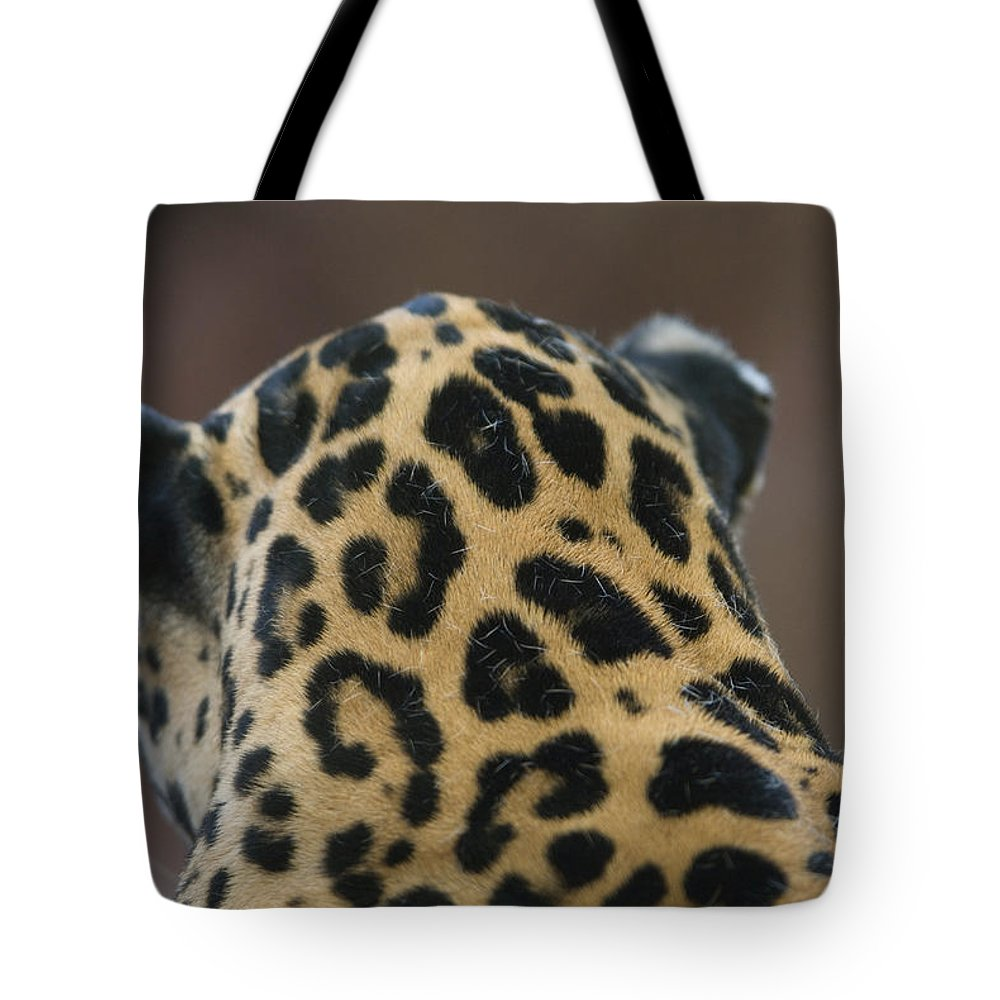 Photography Tote Bag featuring the photograph A Jaguar At Omahas Henry Doorly Zoo by Joel Sartore