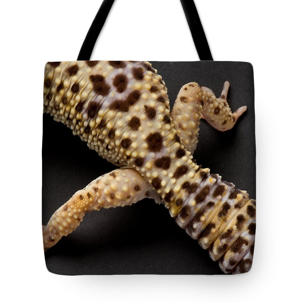 Photography Tote Bag featuring the photograph A Leopard Gecko Eublpharis Macularis by Joel Sartore