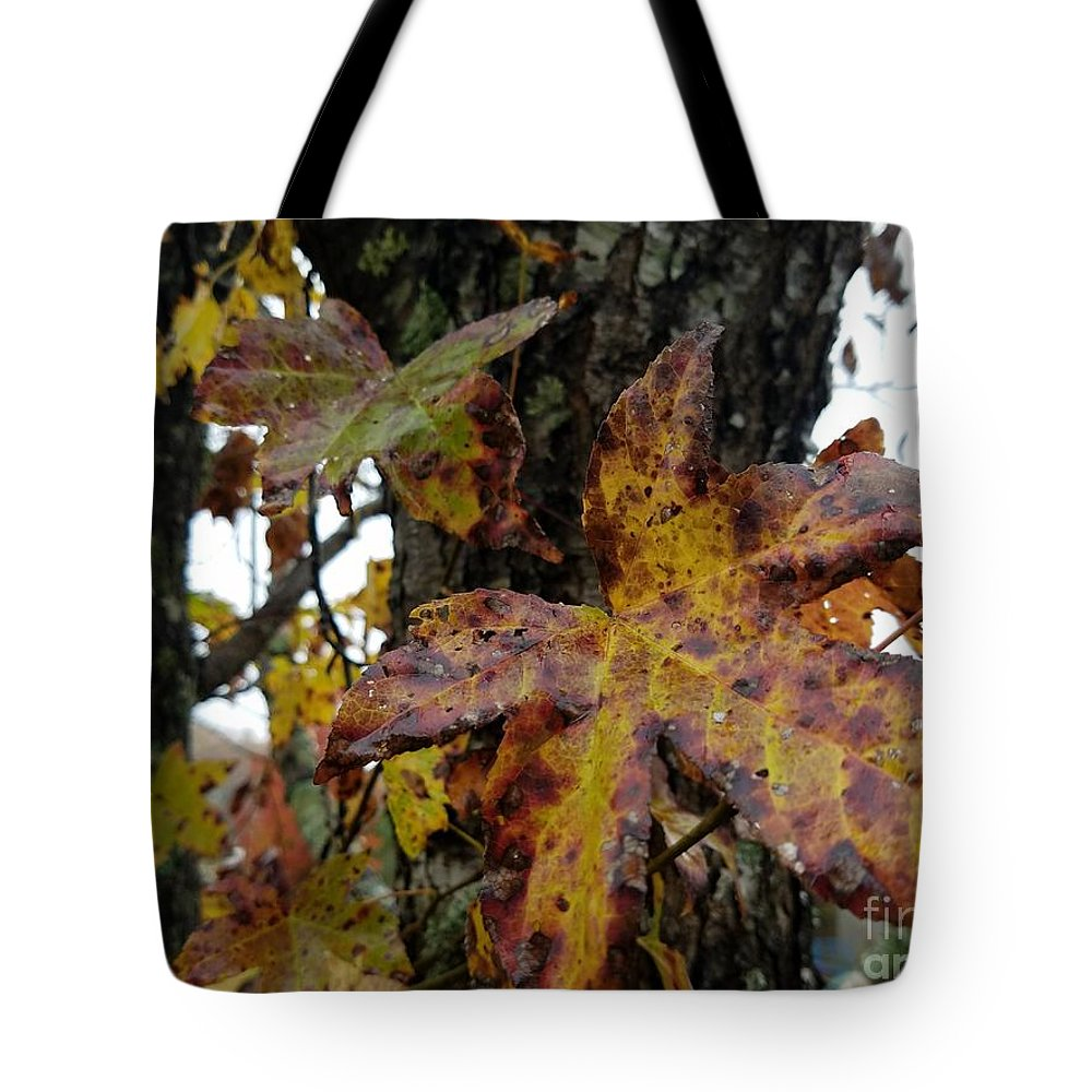A Lil Bit Of Fall Tote Bag featuring the photograph A Lil Bit Of Fall by Maria Urso