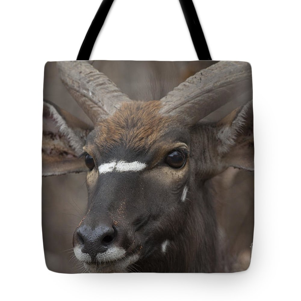Antelope Tote Bag featuring the photograph A Long Look by Leigh Lofgren