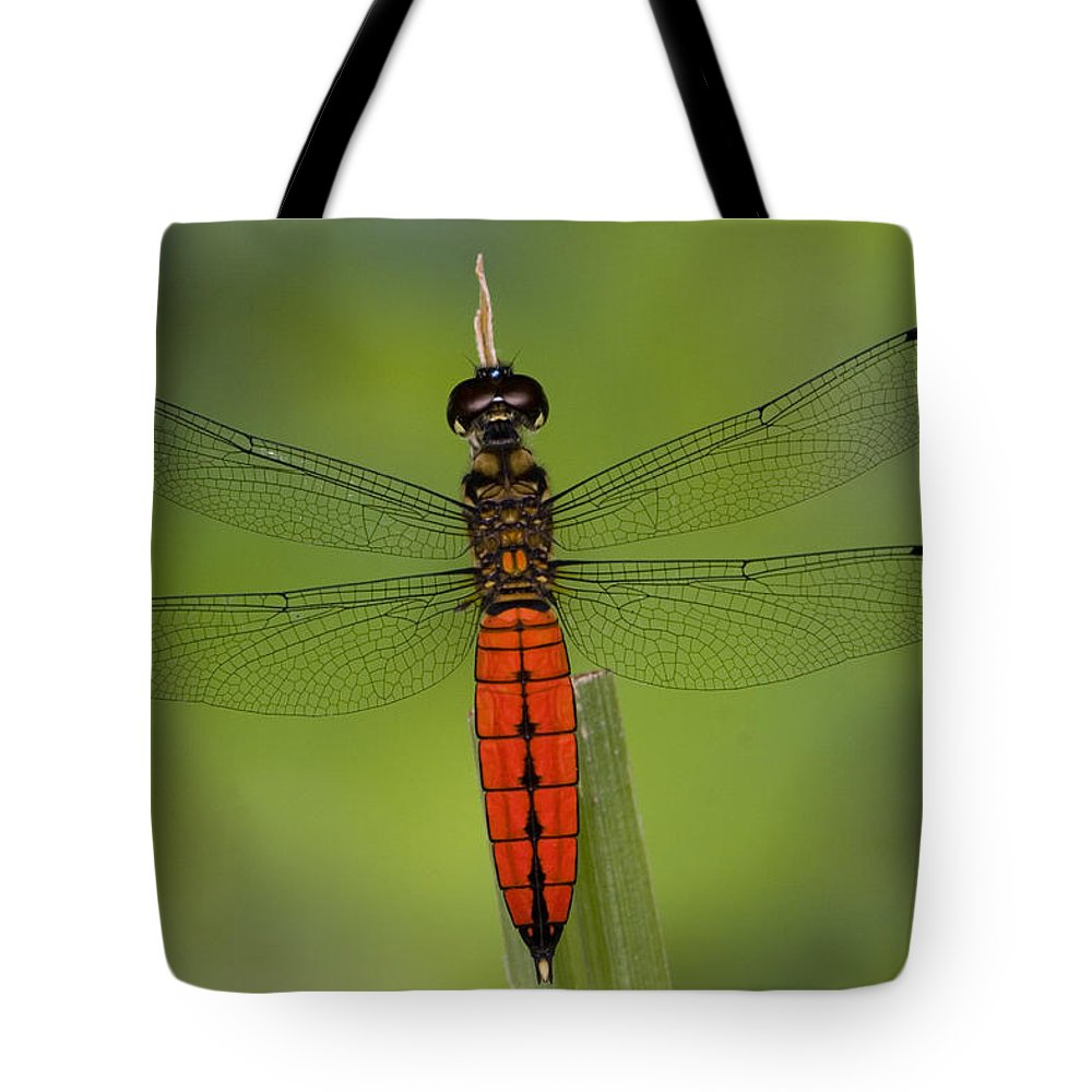 Close Up Tote Bag featuring the photograph A Male Forest Chaser Dragonfly Rests by Joe Petersburger