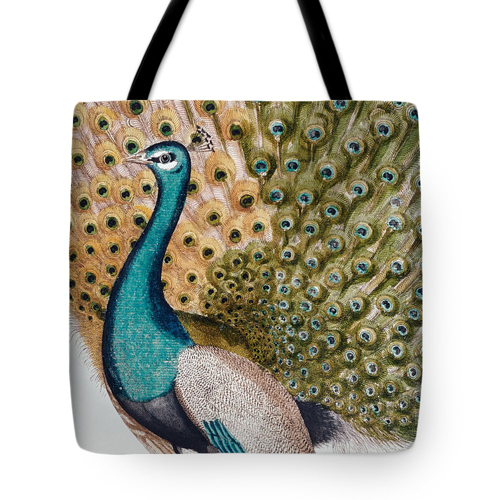 Peacock Tote Bag featuring the painting A Male Peacock In Full Display, 1763 by Johann Leonhard Frisch