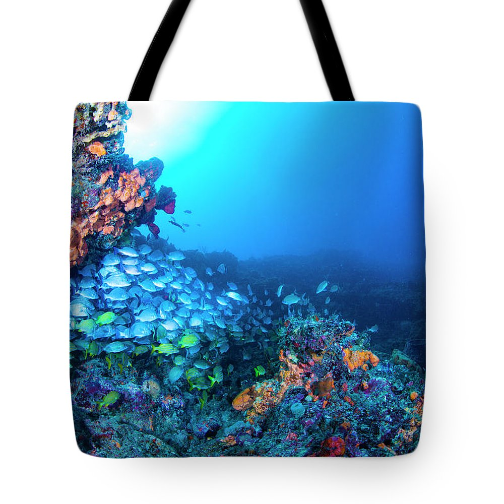 Scene Tote Bag featuring the photograph A New Day by Sandra Edwards