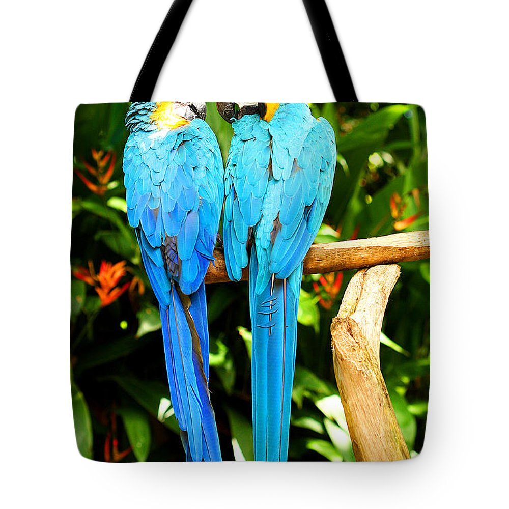 Bird Tote Bag featuring the photograph A Pair Of Parrots by Marilyn Hunt