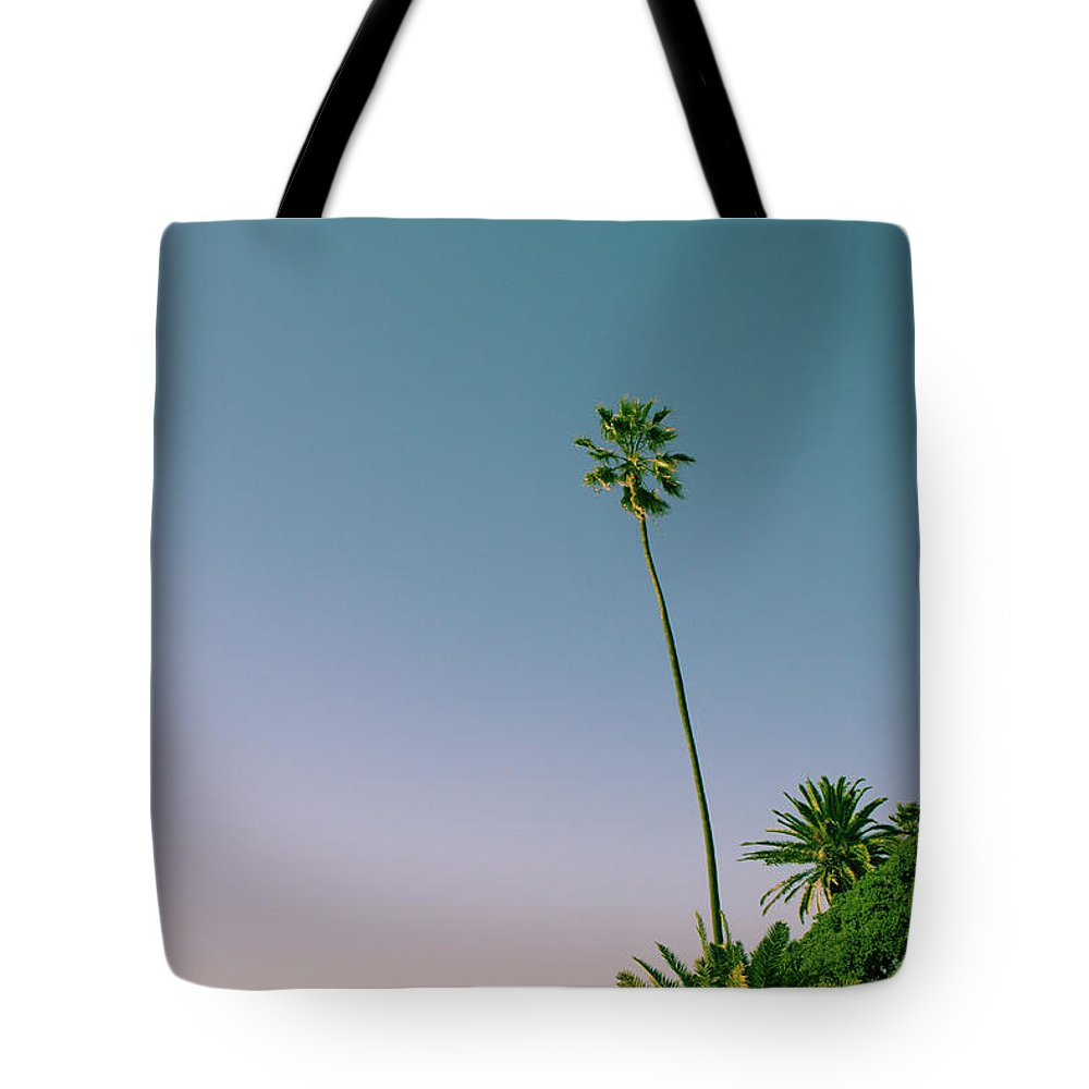 Palm Tree Tote Bag featuring the photograph A Palm On Its Own by Matthew Wolf