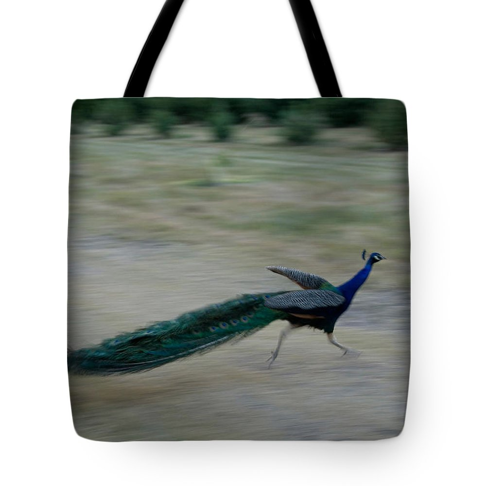 Photography Tote Bag featuring the photograph A Peacock On A Hog Farm In Kansas by Joel Sartore