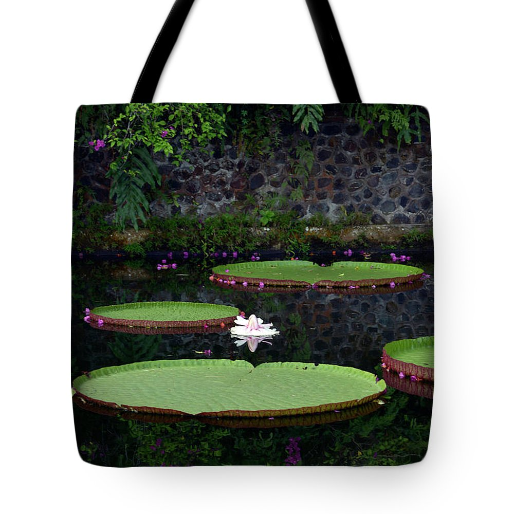 Lotus Tote Bag featuring the photograph A Place Of Peace by Katherine Jeans