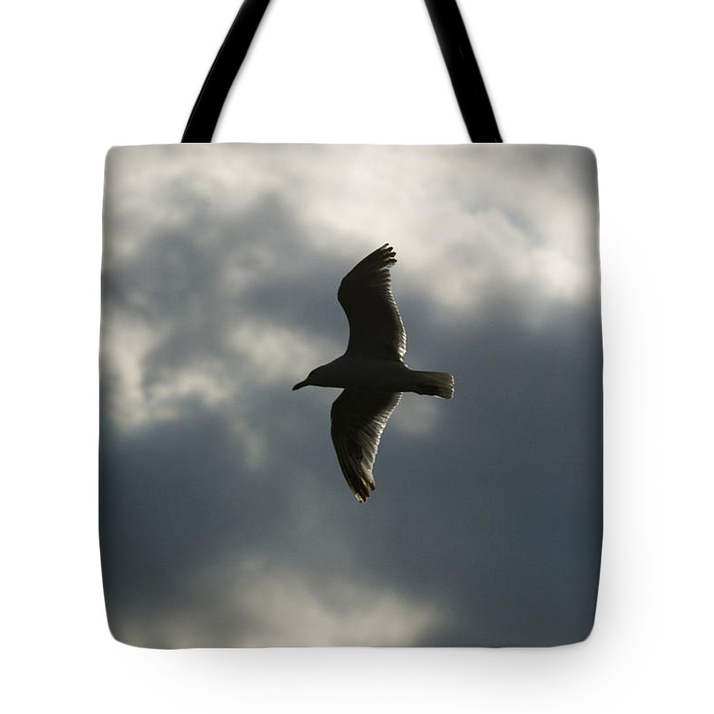 Photography Tote Bag featuring the photograph A Seagull With Outstretched Wings Soars by Todd Gipstein