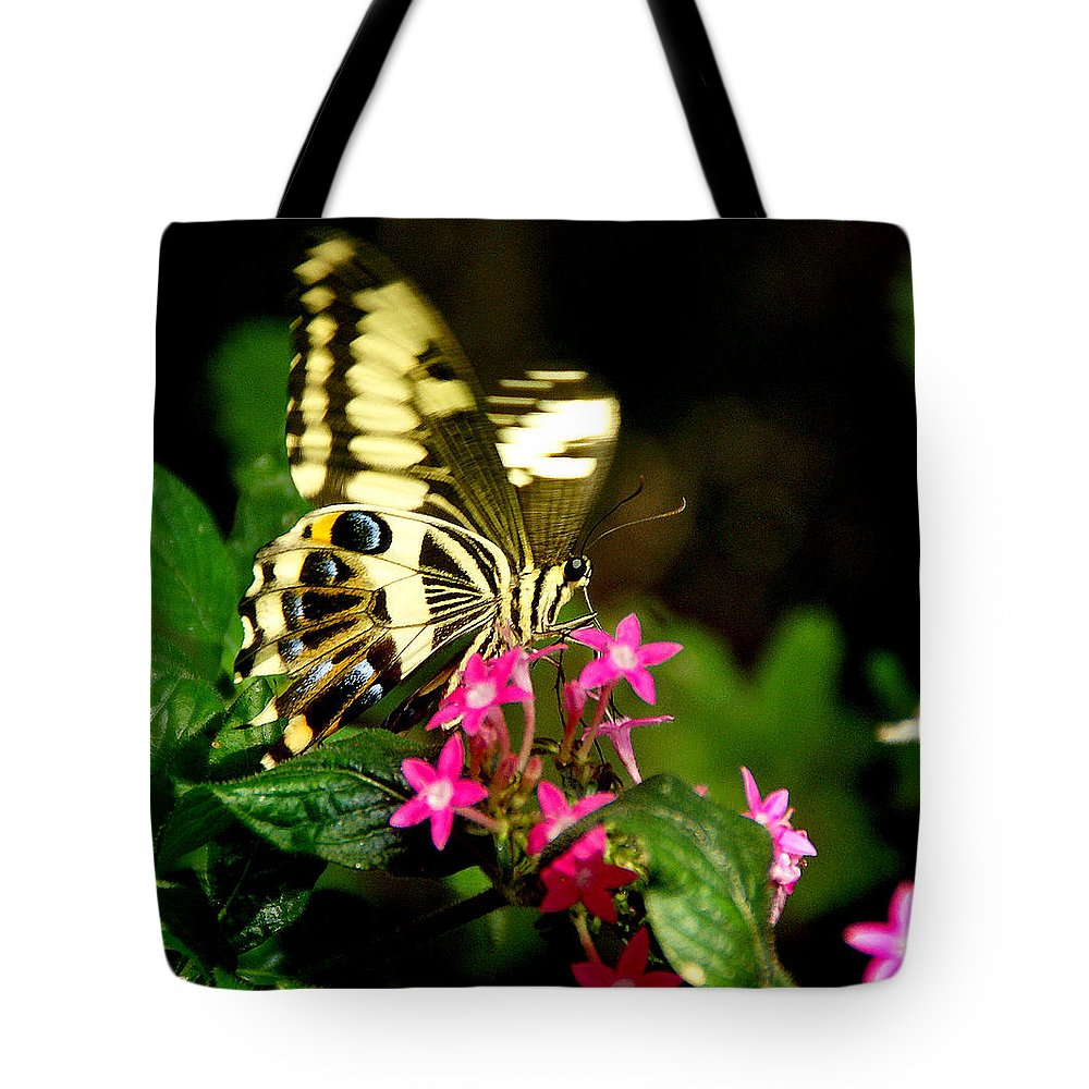 Straw Tote Bag featuring the photograph A Sip Of Nectar by Martin Massari