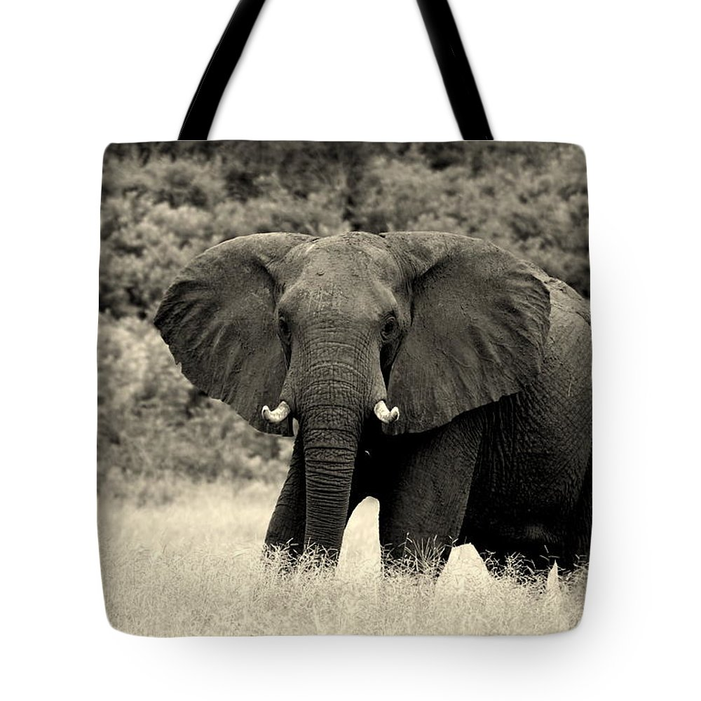 Elephant Tote Bag featuring the photograph A Sixth Sense by Garreth Brown
