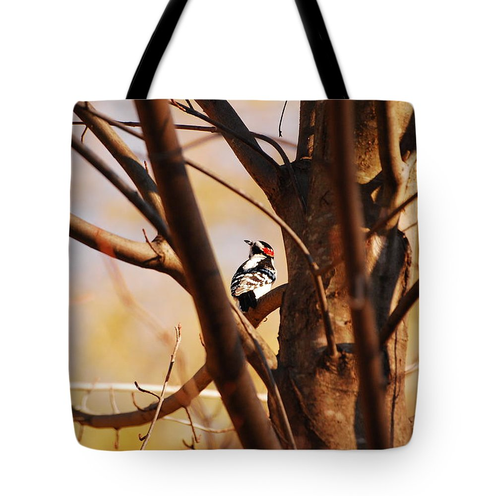 Woodpecker Tote Bag featuring the photograph A Spot Of Red by Lori Tambakis