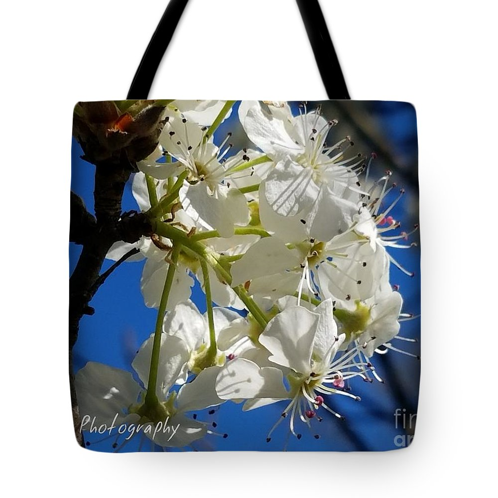 A Spring Delight Tote Bag featuring the photograph A Spring Delight by Maria Urso