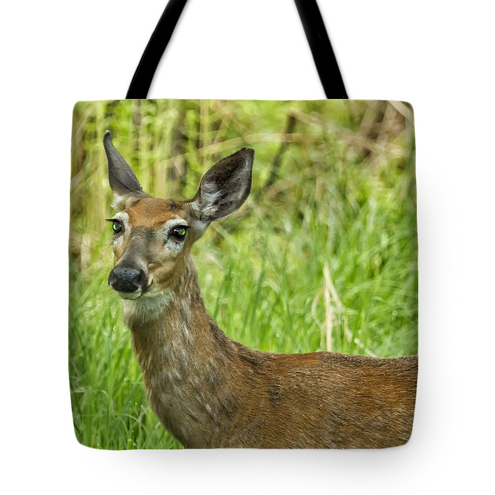 Deer Tote Bag featuring the photograph A Stardust Child Of Woodstock No. 2 by Belinda Greb