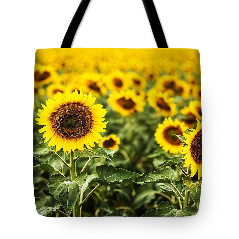 Agriculture Tote Bag featuring the photograph A Sunflower Plantation In Summer In South Dakota by Carol Mellema