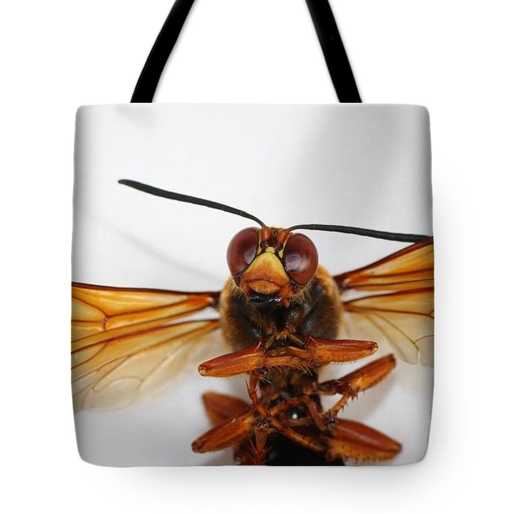 Insects Tote Bag featuring the photograph A Thug Bug by Jennifer Churchman