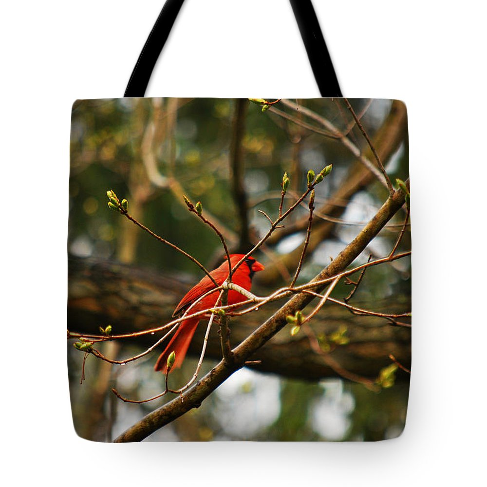 Cardinal Tote Bag featuring the photograph A Touch Of Red by Lori Tambakis