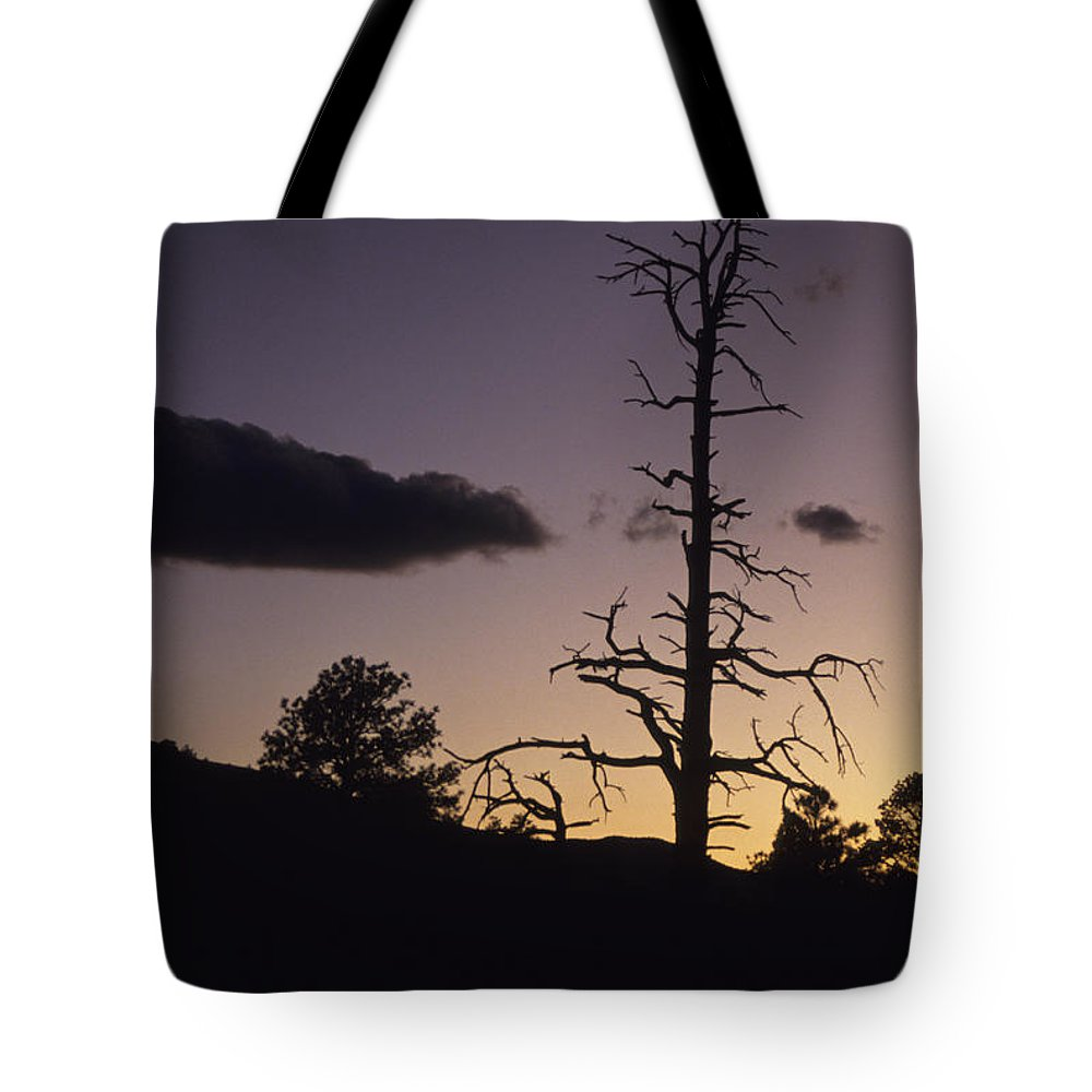 Arizona Tote Bag featuring the photograph A Tree Is Silhouetted By The Setting by Stacy Gold