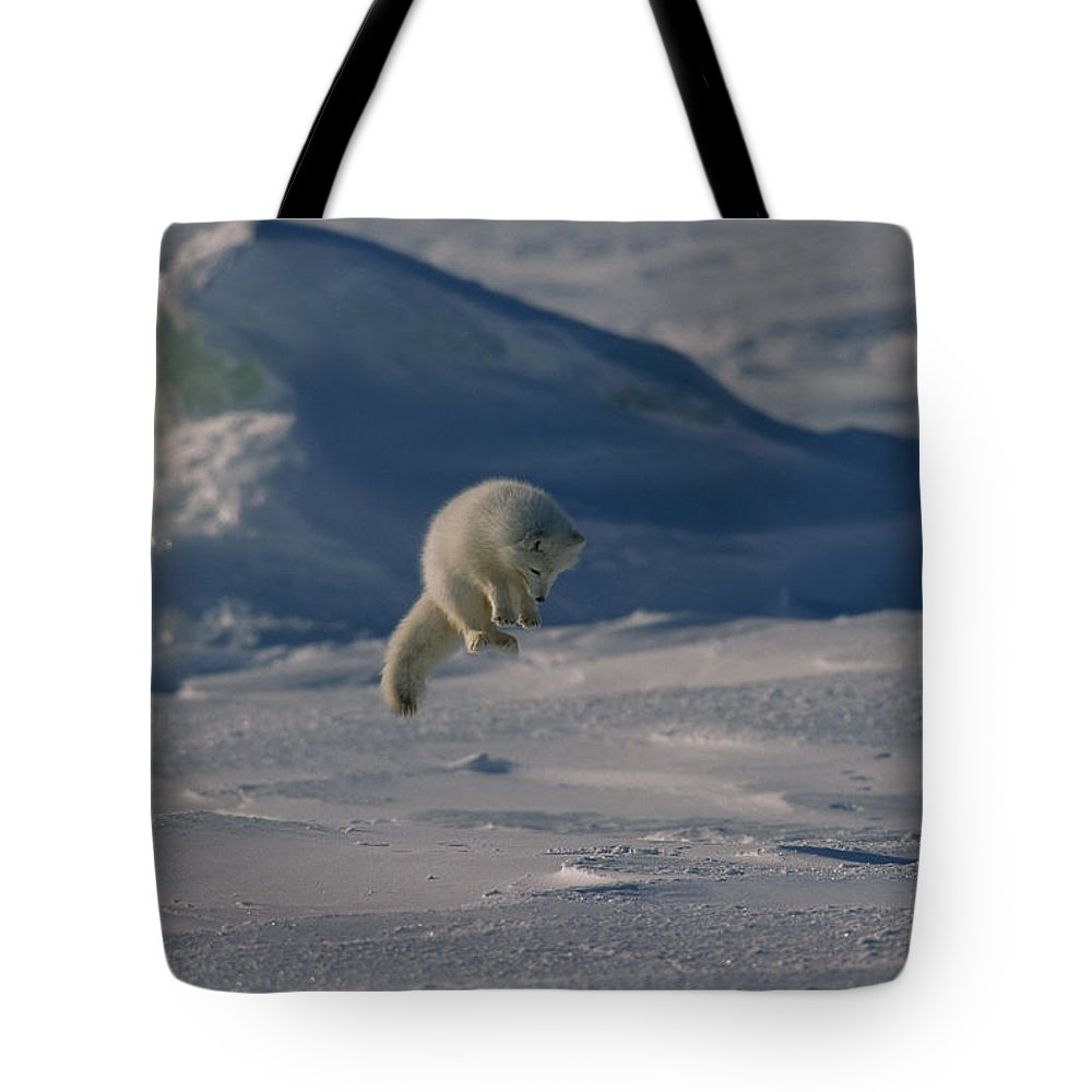 Day Tote Bag featuring the photograph A White Arctic Fox, Alopex Lagopus by Norbert Rosing