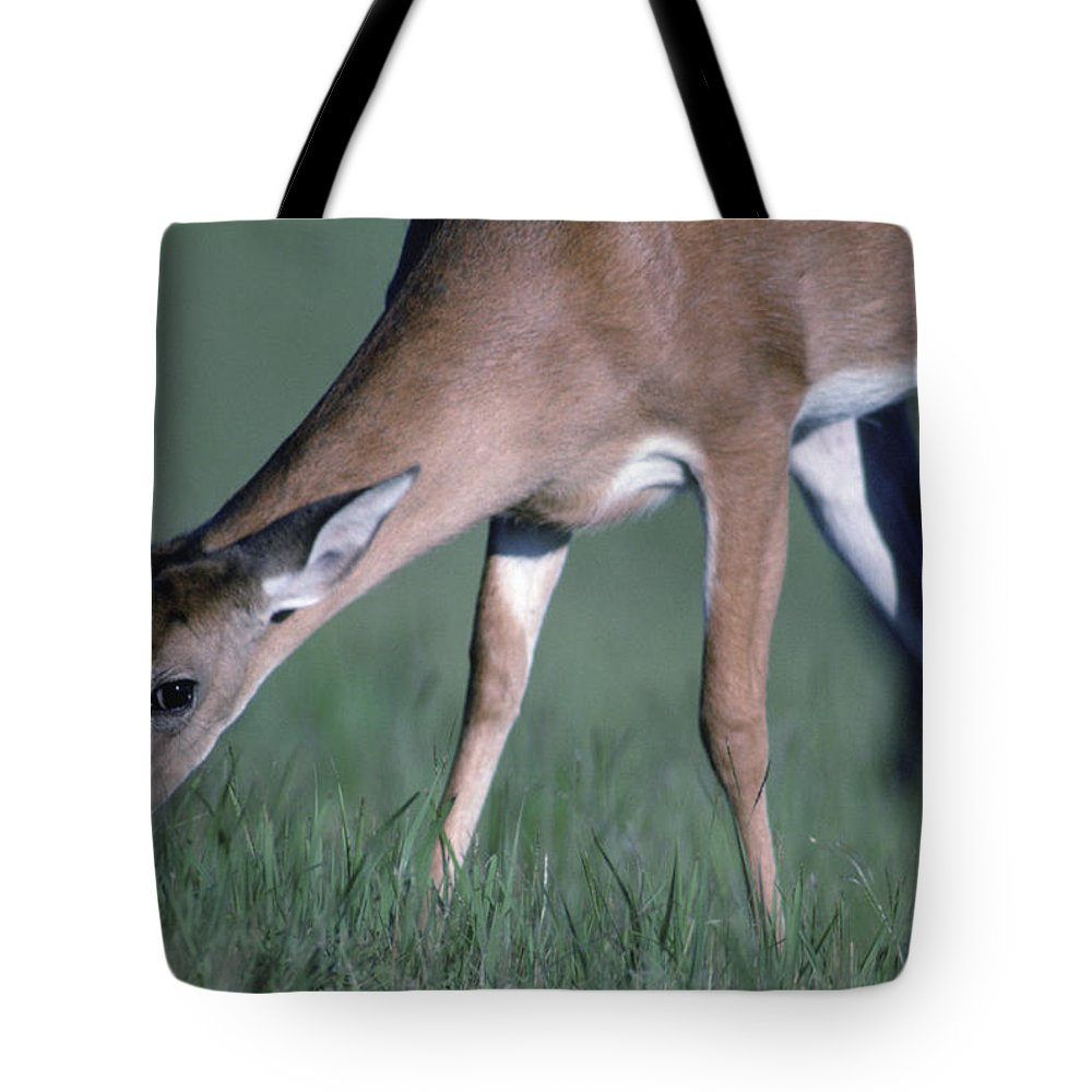 Nobody Tote Bag featuring the photograph A White-tail Deer Munches On Some Green by Joel Sartore