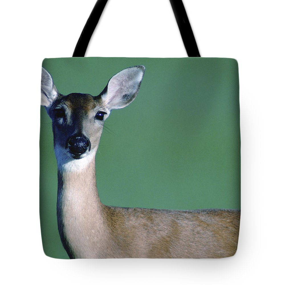 White-tailed Deer Tote Bag featuring the photograph A White-tailed Deer On The Prairie by Joel Sartore