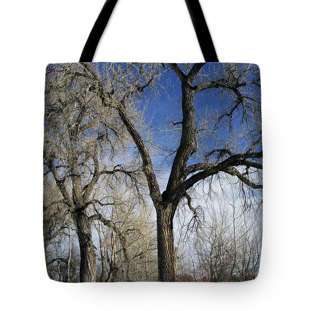 Tree Tote Bag featuring the photograph A Winter Kiss by Angelina Tamez