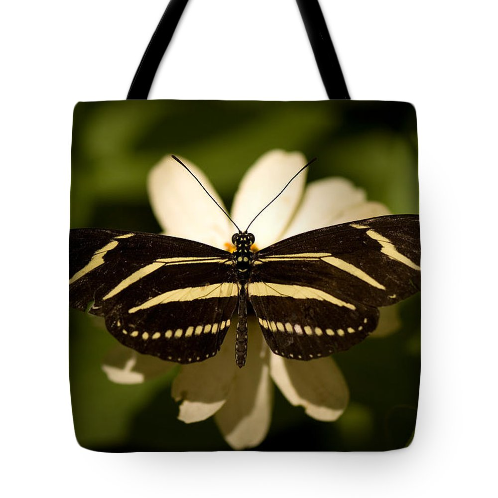 Nobody Tote Bag featuring the photograph A Zebra-winged Butterfly At The Lincoln by Joel Sartore