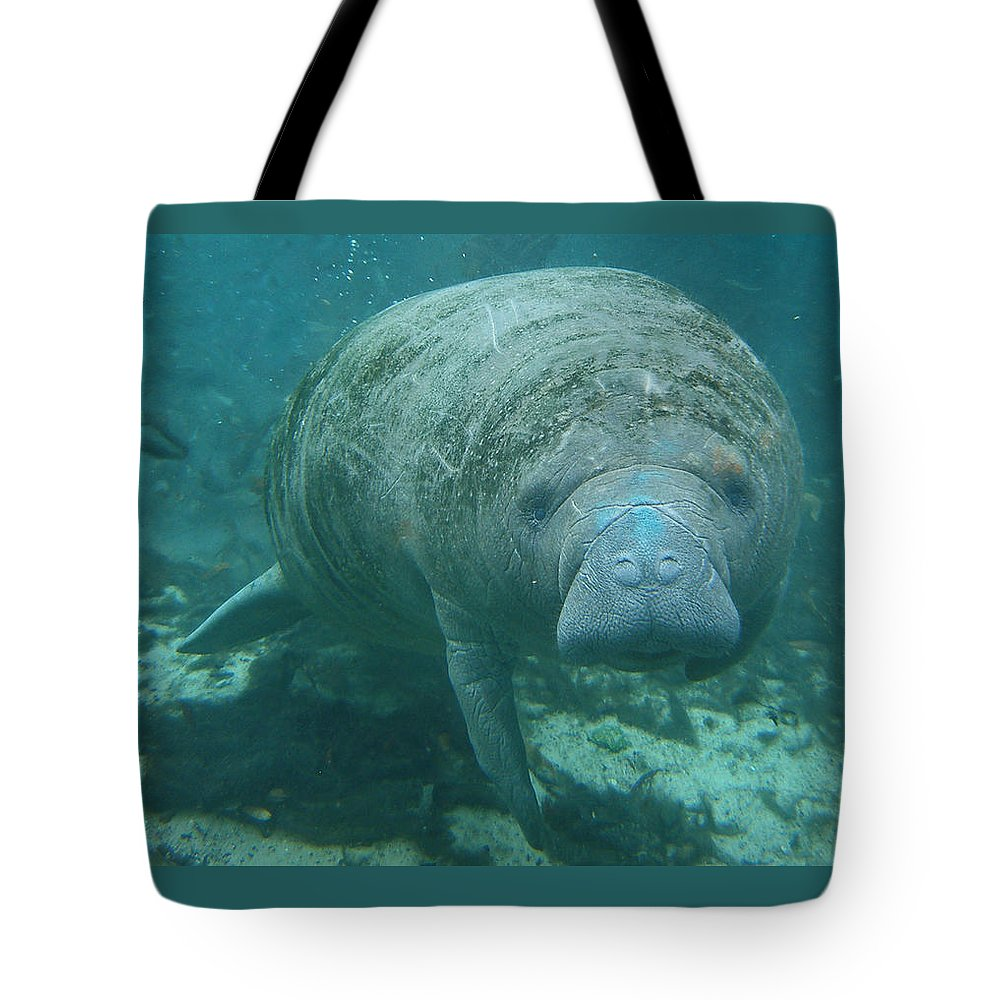 Joy Tote Bag featuring the photograph About To Meet A Manatee by Kimberly Mohlenhoff