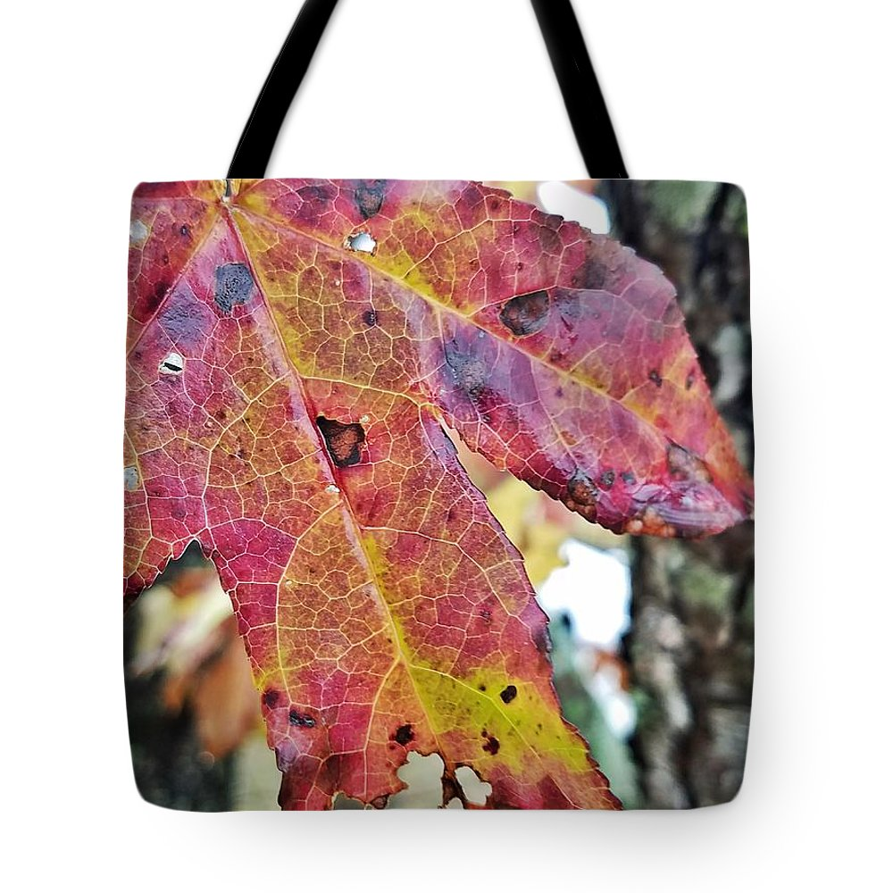 Abstract Autumn Leaf 2 Tote Bag featuring the photograph Abstract Autumn Leaf 2 by Maria Urso