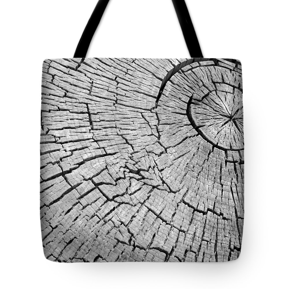 Trees Tote Bag featuring the photograph Abstract Tree Cut by James BO Insogna