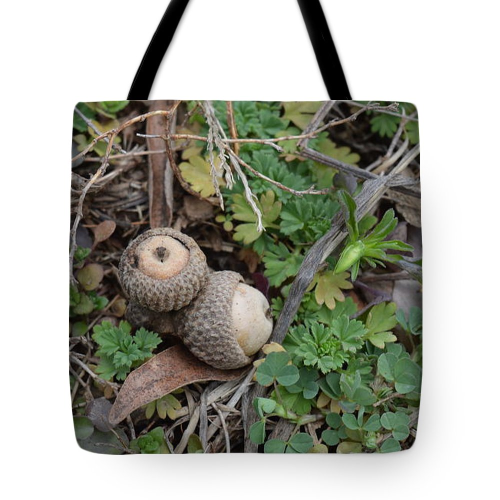 Acorns Tote Bag featuring the photograph Acorns by Diane Friend