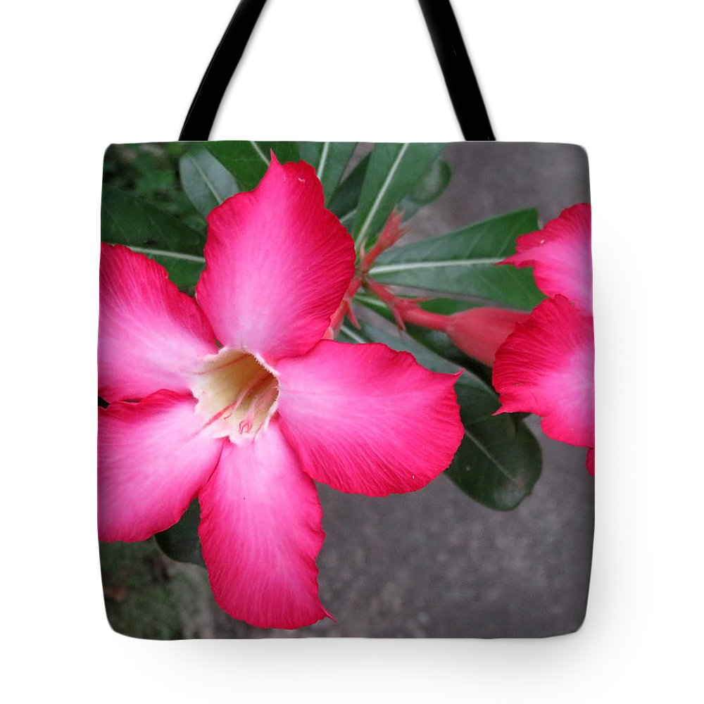 Flowers Tote Bag featuring the photograph Adenium 2 by Cindy Kellogg
