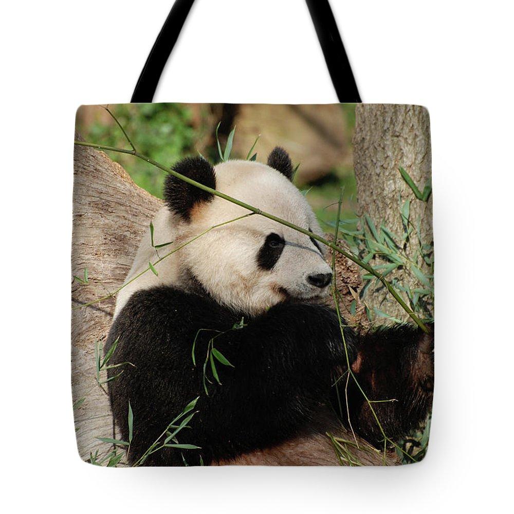 Panda Tote Bag featuring the photograph Adorable Giant Panda Bear Eating Bamboo Shoots by DejaVu Designs