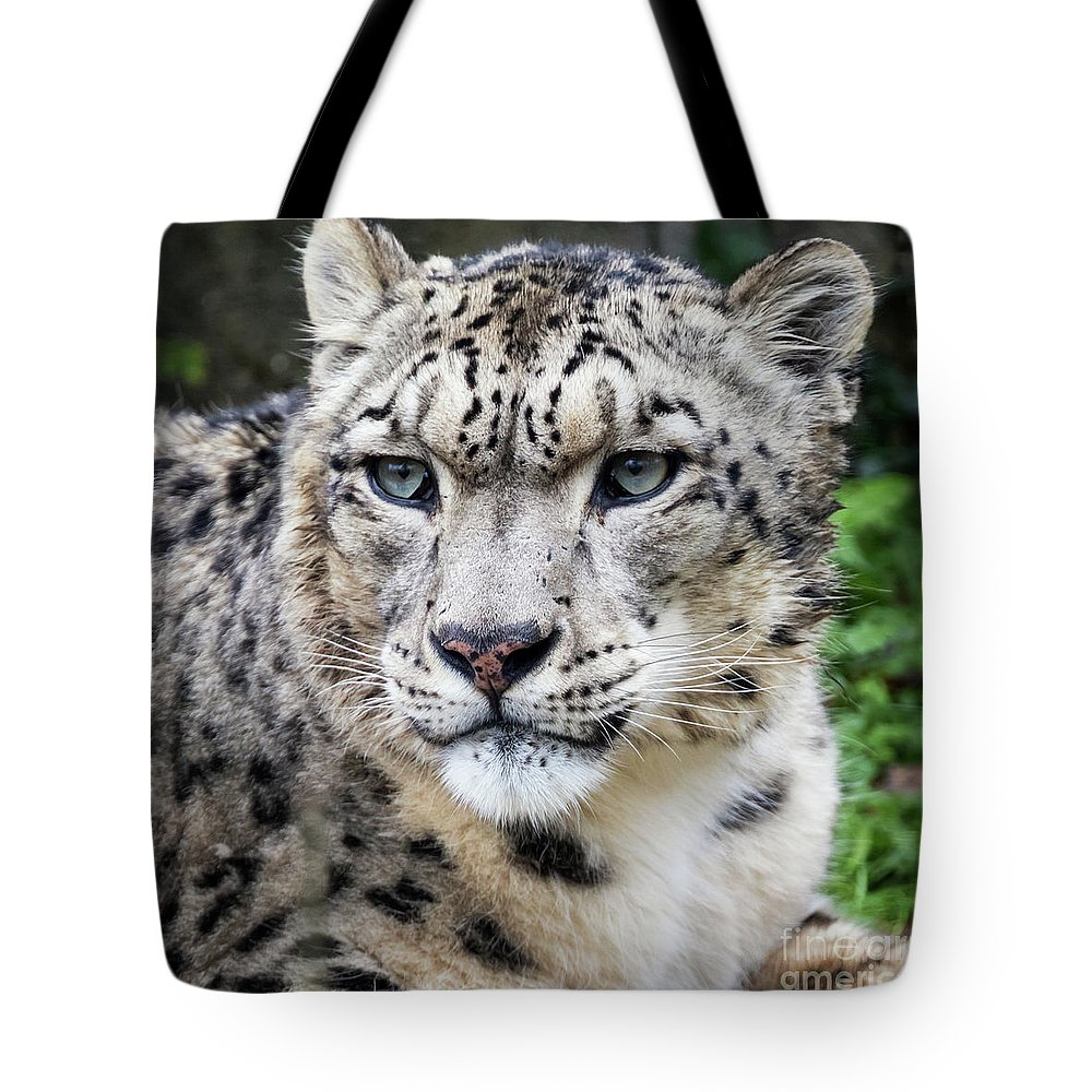 Leopard Tote Bag featuring the photograph Adult Snow Leopard Portrait by Jane Rix