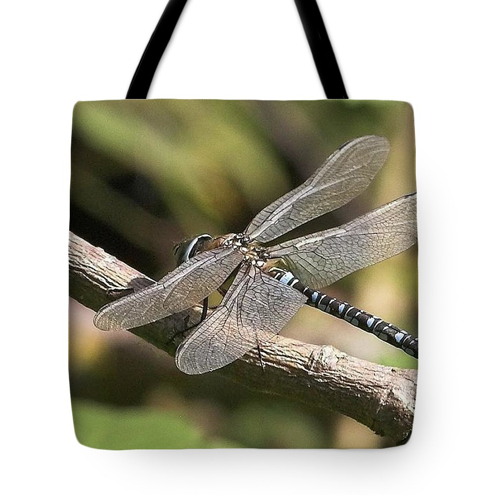 Dragonfly Tote Bag featuring the photograph Aeshna Juncea - Common Hawker Taken At by John Edwards