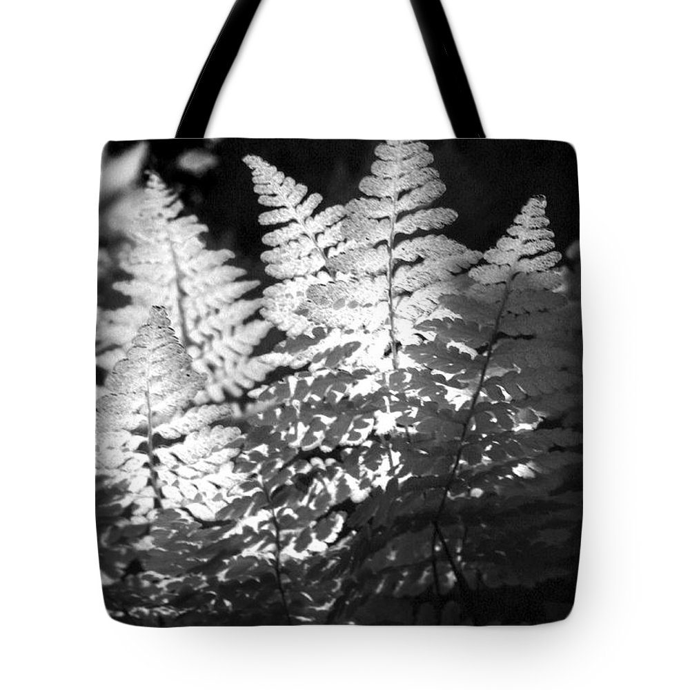 Fern Tote Bag featuring the photograph After Glow by Randy Oberg