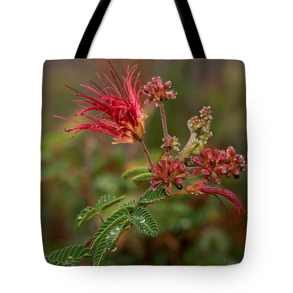 Architecture Tote Bag featuring the photograph After The Desert Rain by Barbara Fagan Sullivan