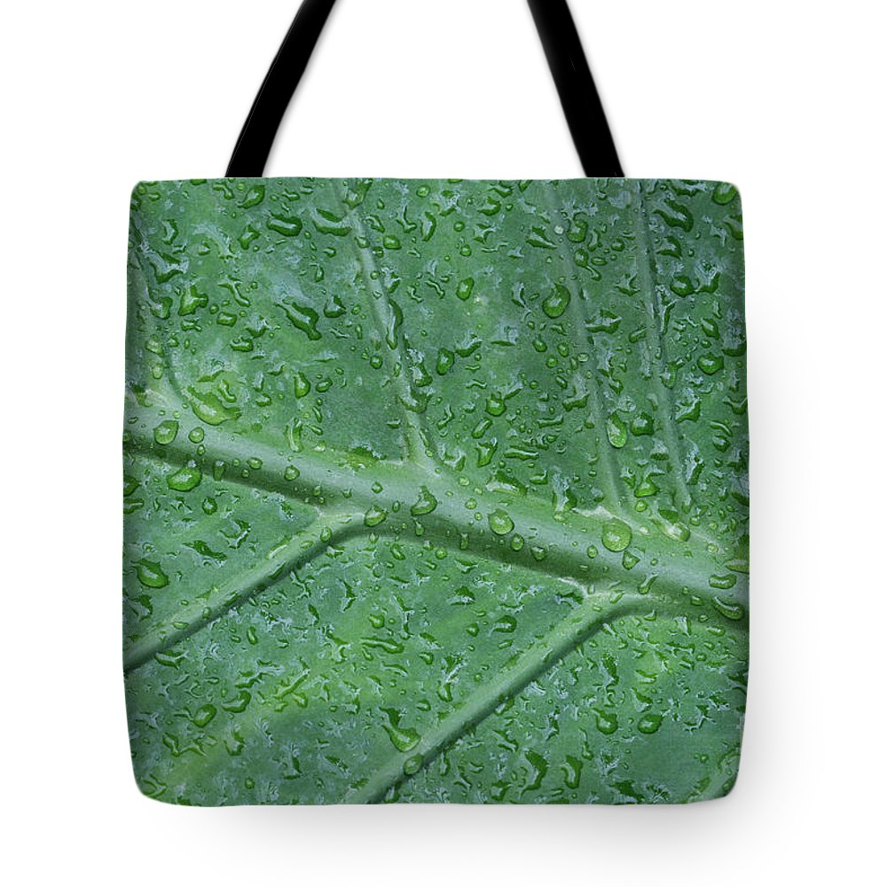 Elephant Ear Palm Tote Bag featuring the photograph After The Rain by Judy Whitton
