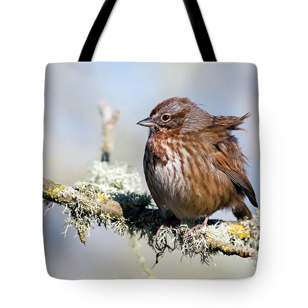 Song Sparrow Tote Bag featuring the photograph Against The Wind by Randall Ingalls