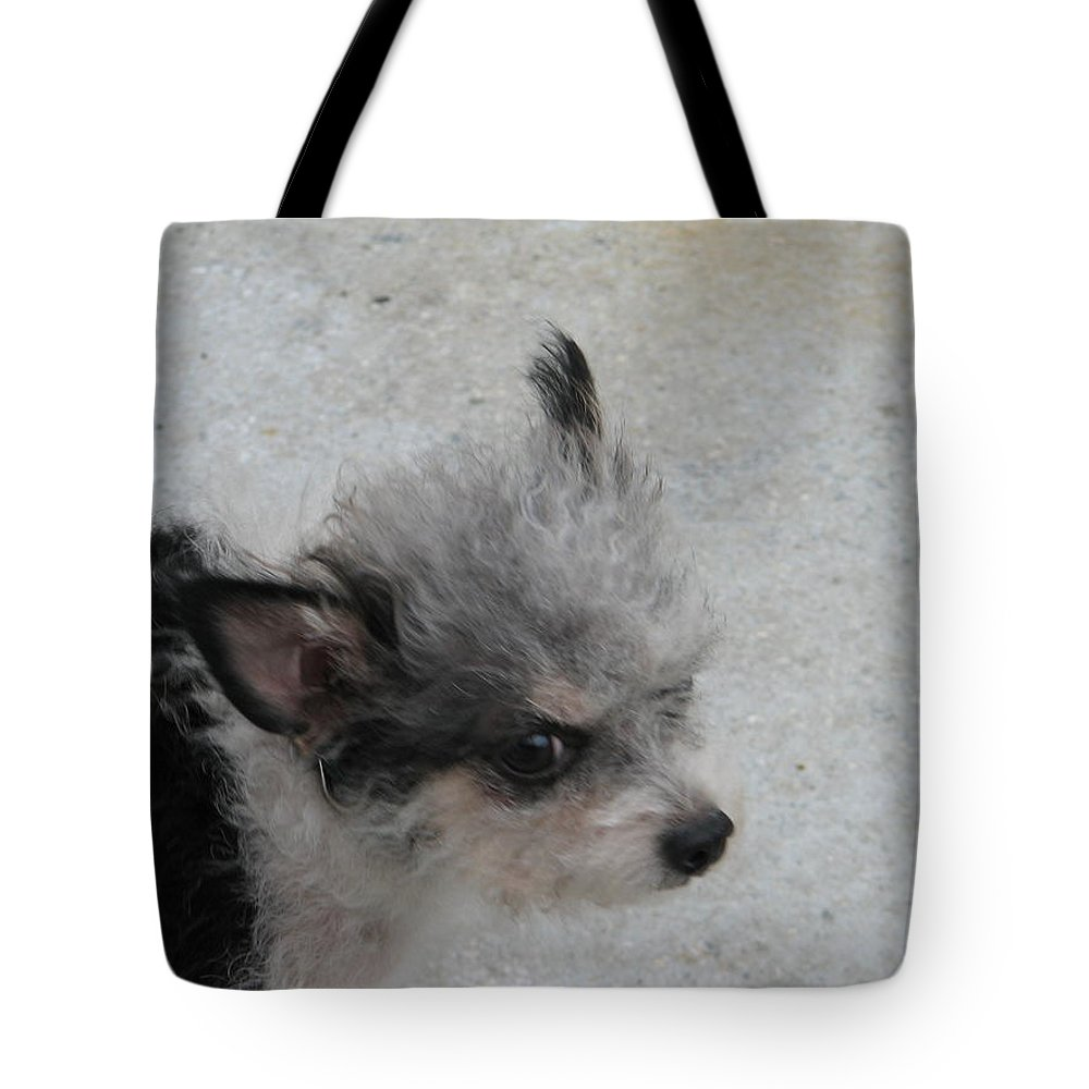 Puppy Tote Bag featuring the photograph Airport Pup by Kelly Mezzapelle