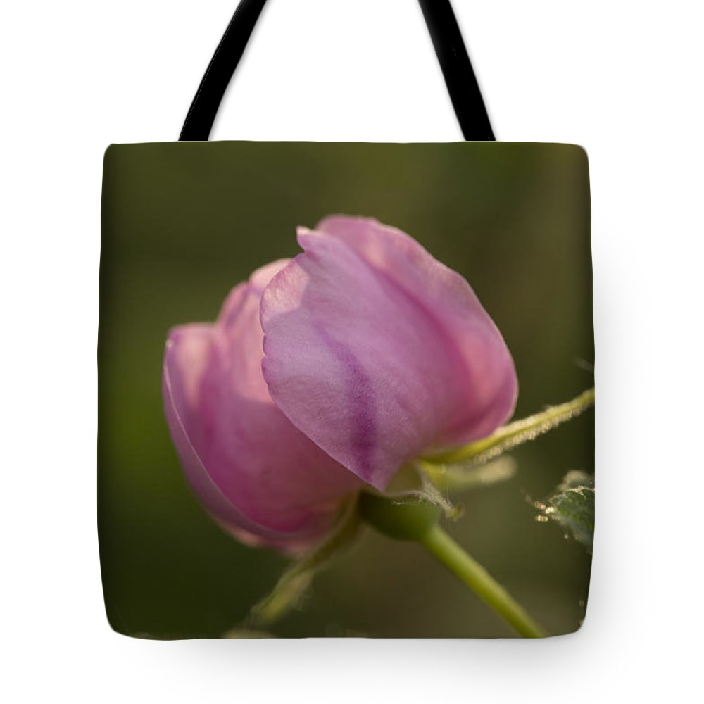 Flower Tote Bag featuring the photograph Alberta Rose Bud2 by Liz Howerton