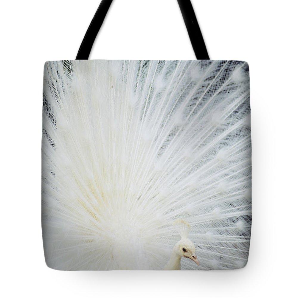 Albino Tote Bag featuring the photograph Albino Peacock by Rita Ariyoshi - Printscapes