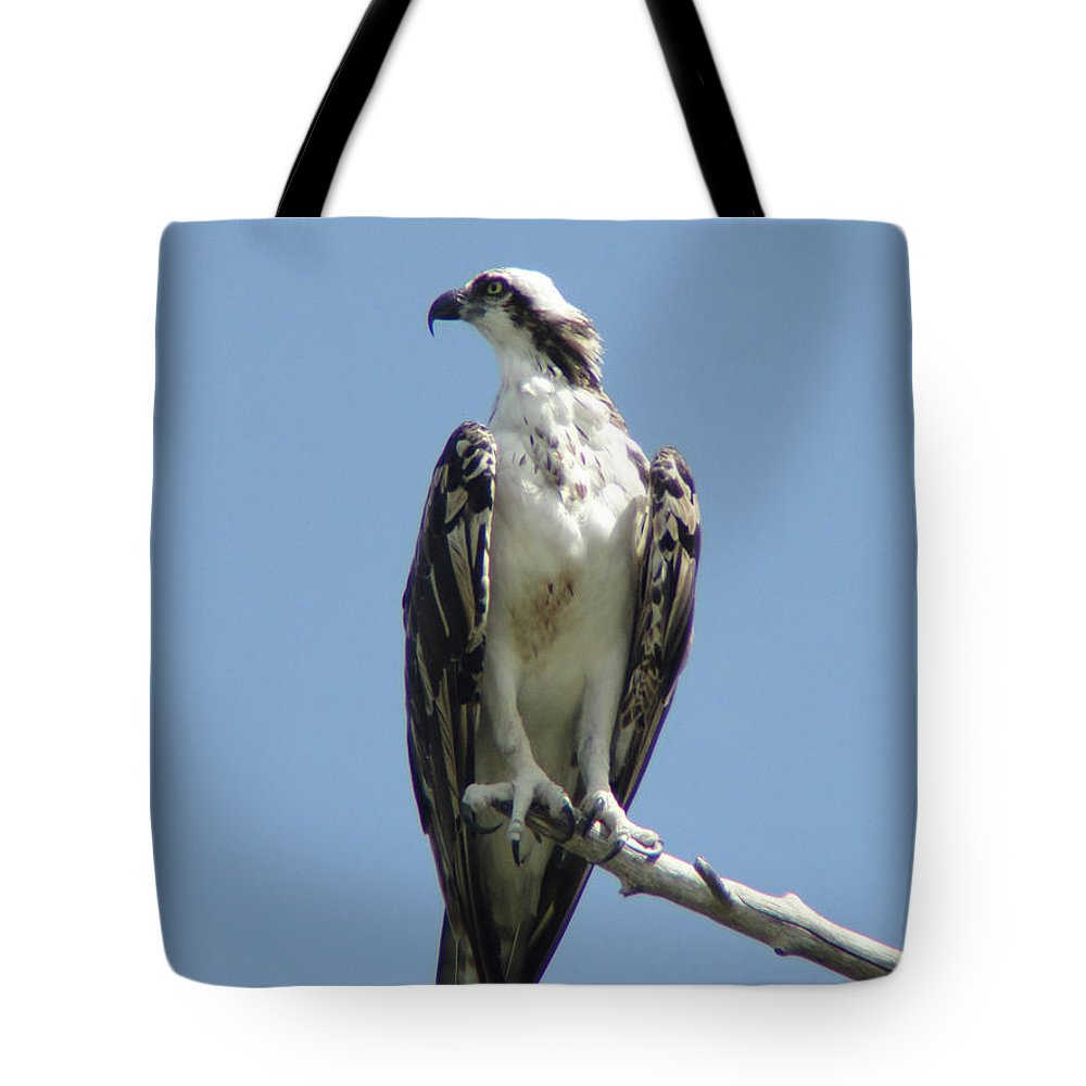 Sky Tote Bag featuring the photograph Alert by Cathi Abbiss Crane