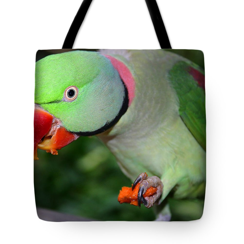 Alexandrine Parrot Tote Bag featuring the photograph Alexandrine Parrot Feeding by Ralph A Ledergerber-Photography