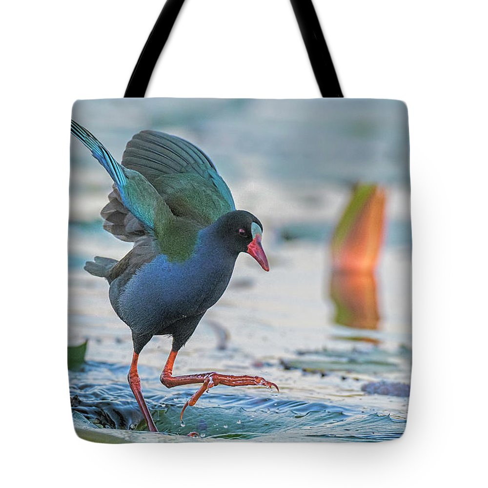 001 Avian Tote Bag featuring the photograph Allen's Gallinule by Myer Bornstein